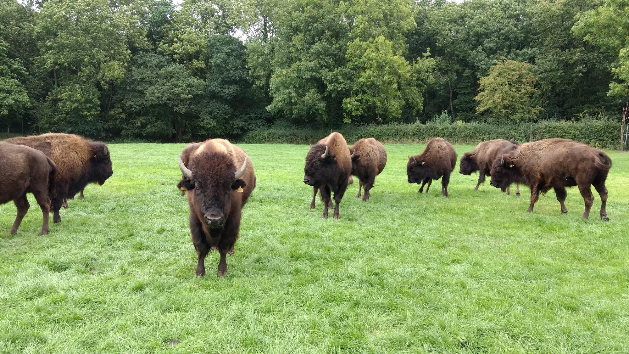 The Bison Farm